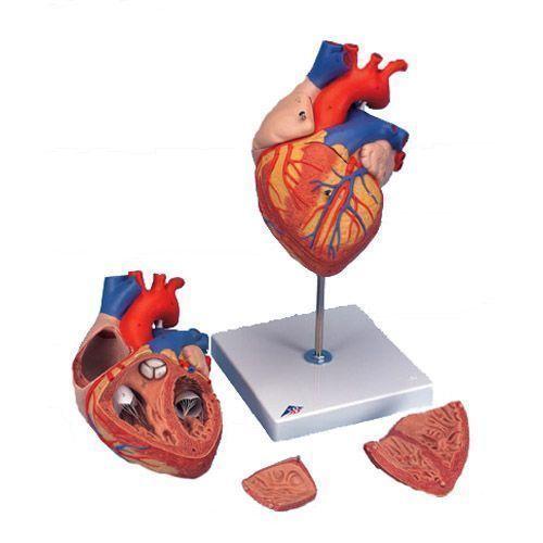 Cœur, agrandi 2 fois, en 4 parties G12