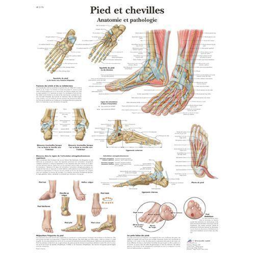 Planche anatomique Pied et chevilles - Anatomie et pathologie VR2176L