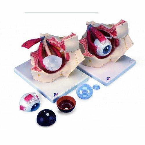 Model oka, 7-części, 3 razy powiększony F13