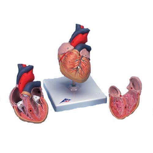 Cœur, en 2 parties G08