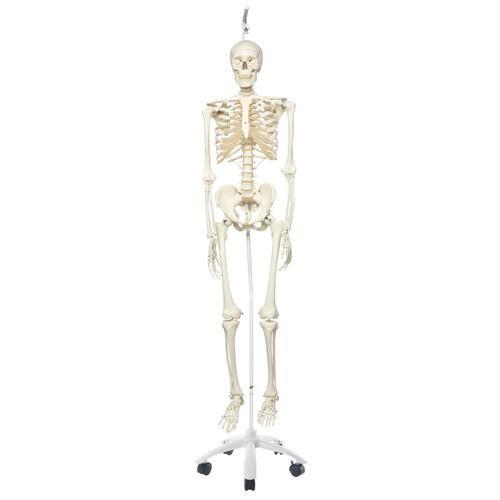 Squelette classique Stan suspendu A10/1